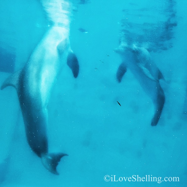 Winter Dolphin Clearwater Aquarium