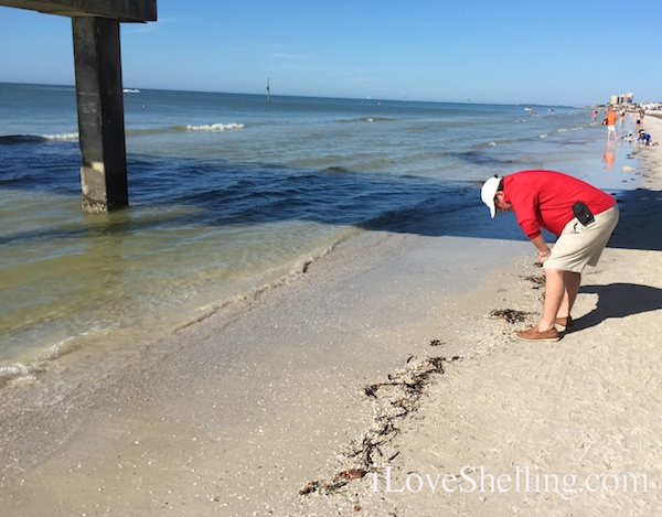 shelling Hilton Clearwater Beach Pier 60