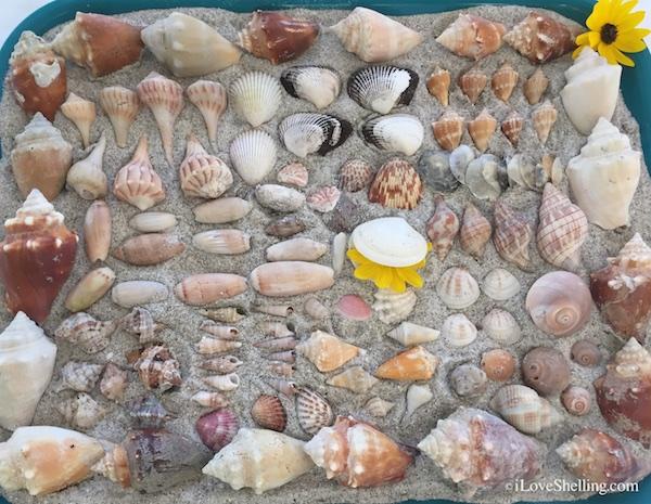 Shellabaloo Sharing With Shell 'N Tell