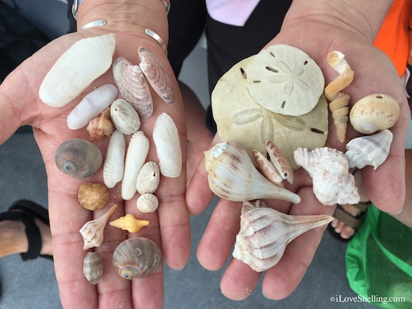 Meeting Friends and Collecting Seashells
