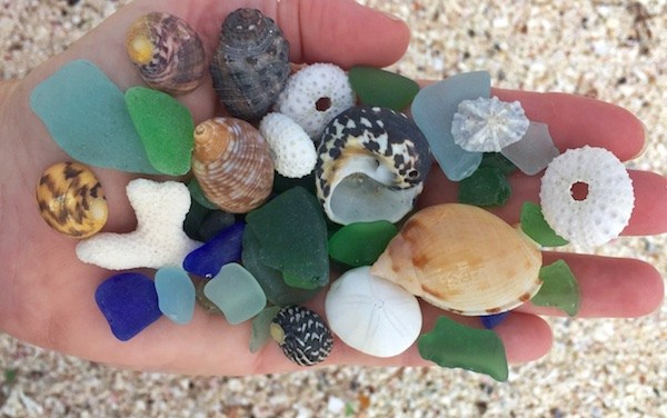 Gone Shelling – Finding Seashells In British Virgin Islands