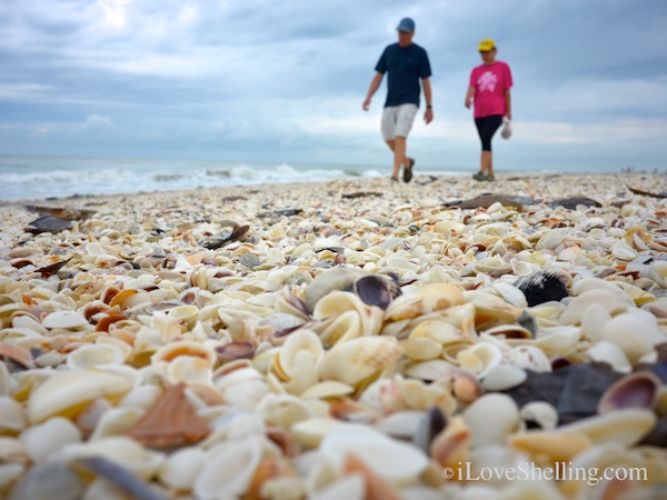 Shellebrating Earth Day