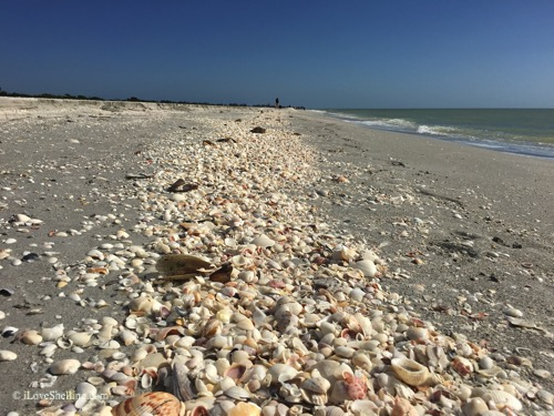 Weekend Wonderland on Sanibel and Captiva