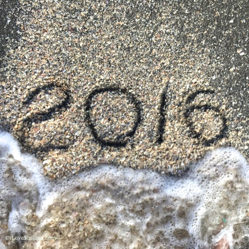 2016 New Years Beach Reshellution