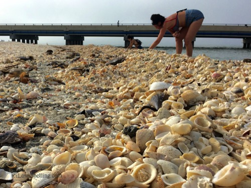Shells and Shellers Color My World