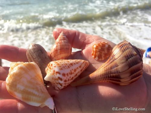 Pouncing For Pretty Seashells