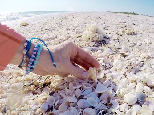 Seashell collecting Sanibel Island Florida