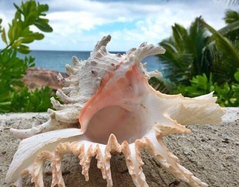 She Saw Seashells While Sailing The Seychelles