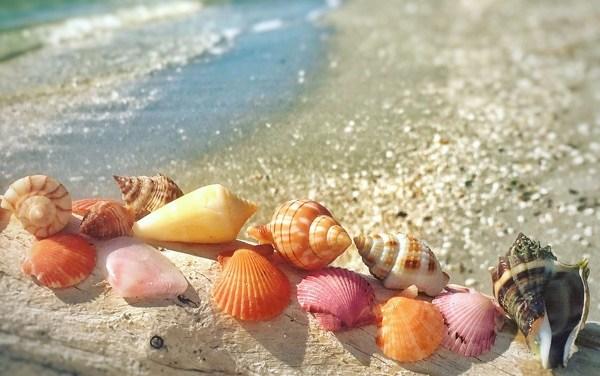 Paradise Found On Bowman's Beach Sanibel
