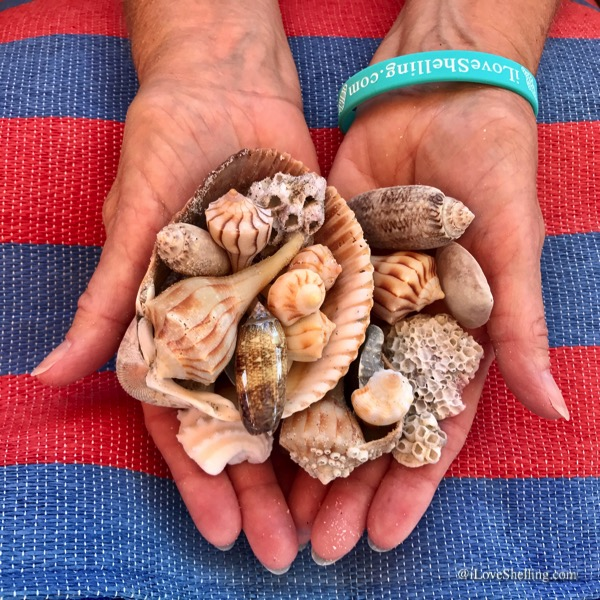 hands with seashells over red and blue