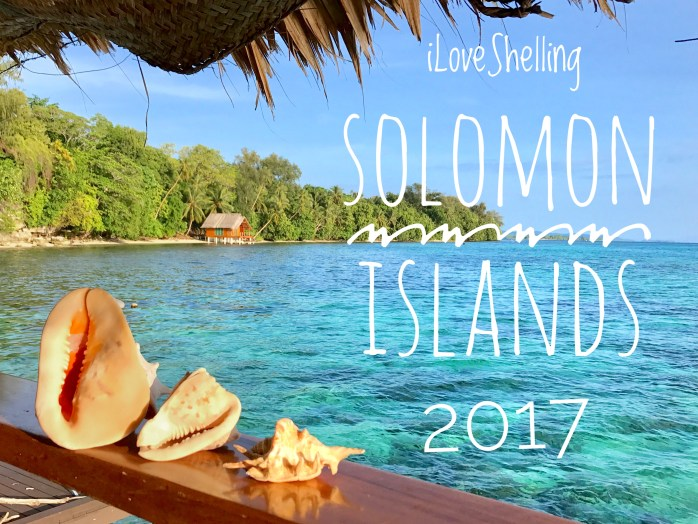i Love Shelling Solomon Islands 2017 seashells