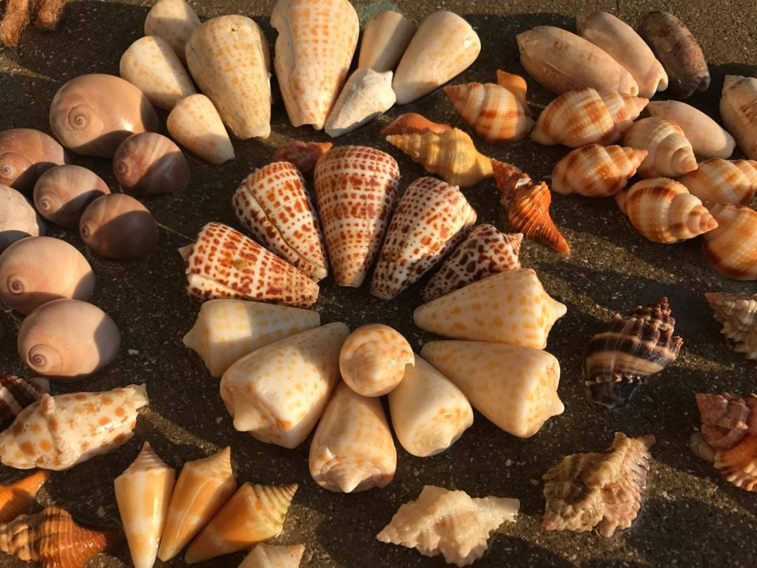 After Hurricane Irma On Fort Myers Beach Florida I Love Shelling