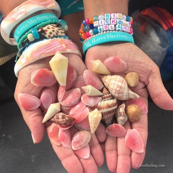 Rose-Petal-Tellin-shells-iLoveShelling-Big-Hickory