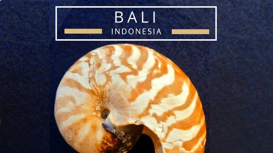 Bali Indonesia seashells beach combing