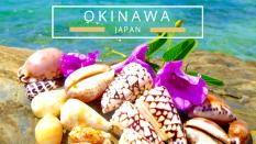 Finding seashells in Okinawa Japan