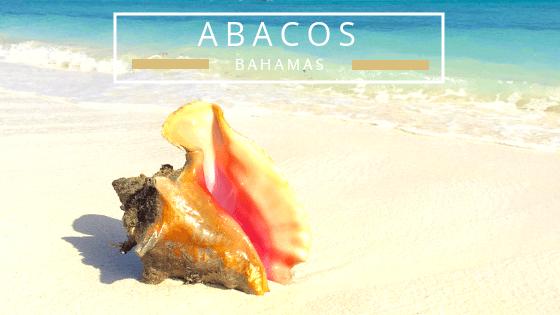 Abacos Bahamas seashells beachcombing
