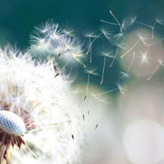Vaccino Covid e allergia a polline, per l'immunologo si può fare