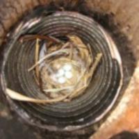 nido di uccelli