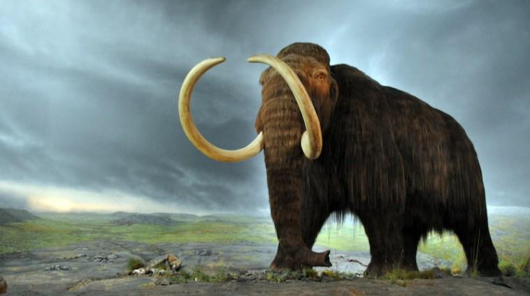 Creare elefanti-mammut per salvare l'Artico