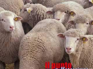 Festa della pastorizia, a San Vittore del Lazio la kermesse su tradizioni e gastronomia