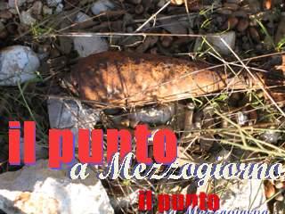 ordigno_bellico_020