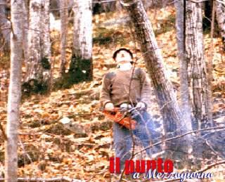Comprano un albero da tagliare da un truffatore a Cassino e rischiano l'arresto per furto