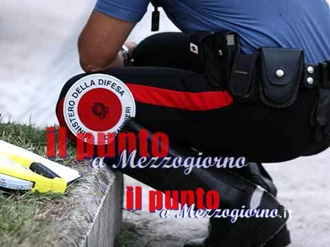 Garage lager scoperto dai carabinieri, salvati quattro cani e due gatti