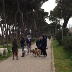 passeggiata_pineta