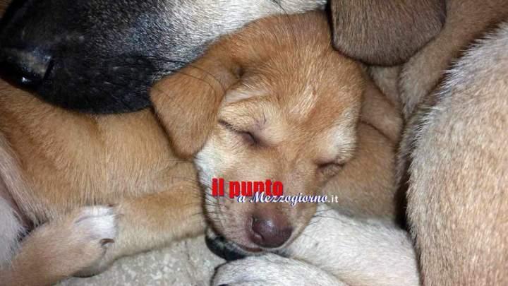 Venti cuccioli di cane senza documenti trovati in un negozio a Frosinone