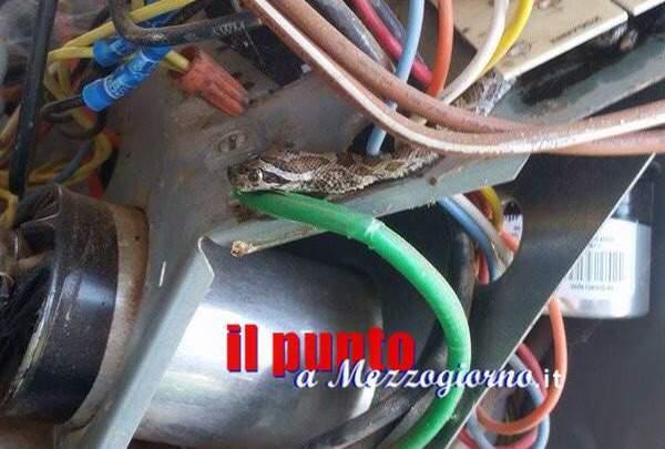 Mimetizzato tra cavi e tubi, serpente si nasconde in una caldaia a Piedimonte San Germano