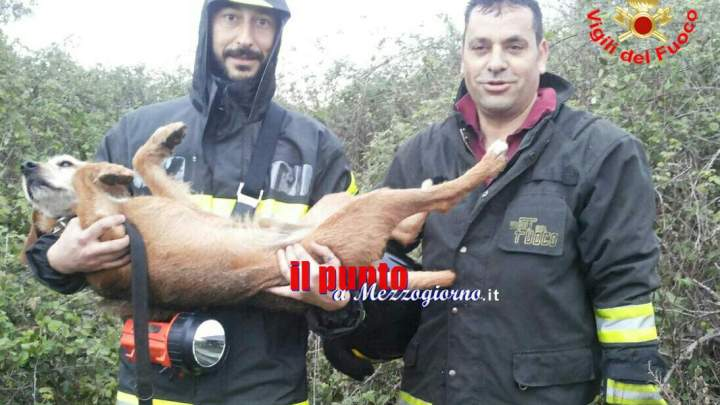 Cagnolino salvato dai vigili del fuoco. Il cucciolo Lillo era rimasto intrappolato tra i rovi
