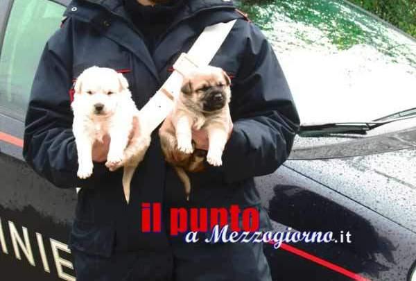 Acuto, cuccioli di cane abbandonati salvati e presi in custodia da un carabiniere