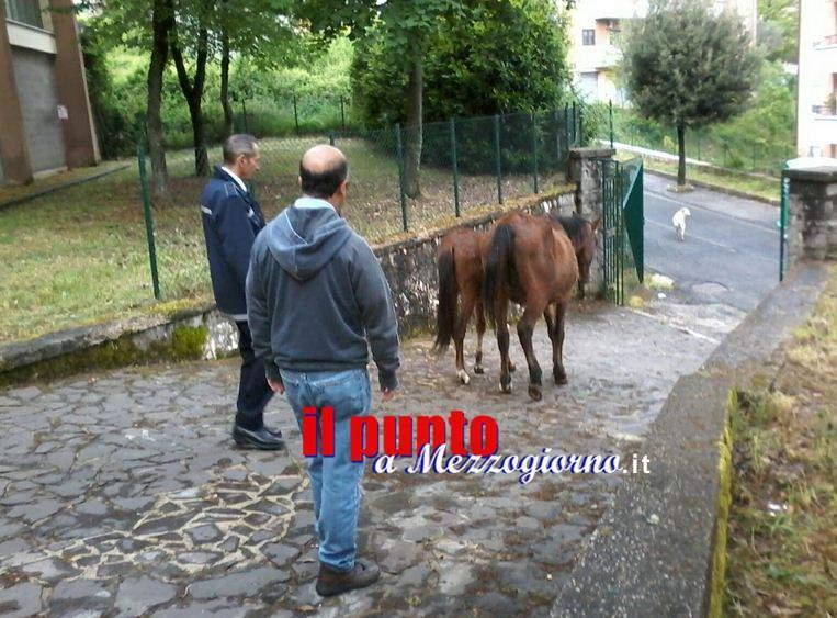Cavalli a scuola a Carpineto Romano, allontanati dai vigili urbani