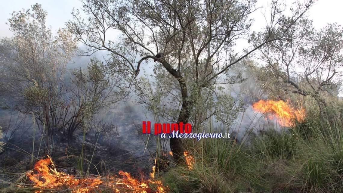 Incendi boschivi. Animali usati come torce. Allarme di Aidaa
