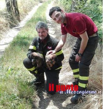 Gettati nel fiume Liri ad Esperia, tre cagnolini salvati dai vigili del fuoco