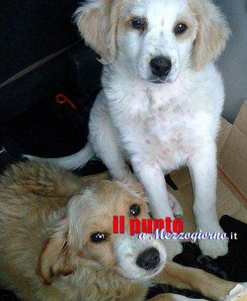 """Randagismo a Cassino, 47 cani sterilizzati. Altieri (Anpana): """"Iniziato giusto viatico"""""""