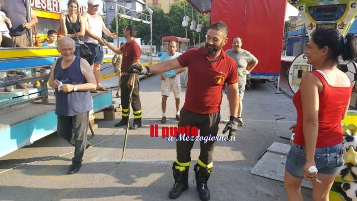 Serpente a spasso in piazza San Giovanni a Cassino, recuperato dai vigili del fuoco