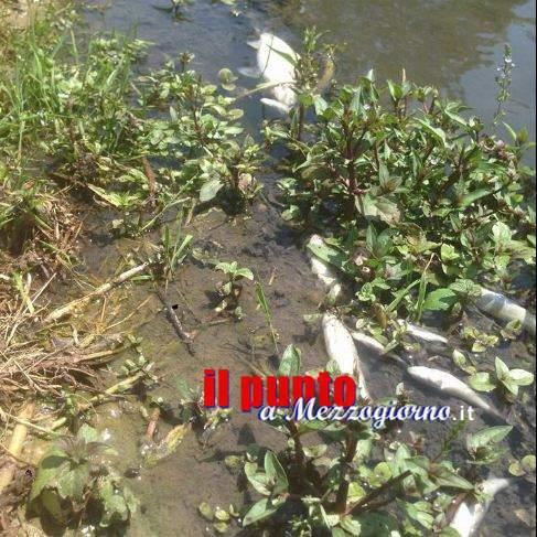 Moria di pesci nel Cassinate, rassicurazioni per il Faio preoccupazioni per il Pioppeto