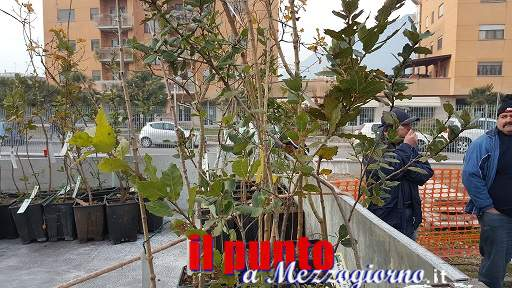 Consegnati agli Istituti Comprensivi i 50 alberi provenienti dal Parco degli Aurunci