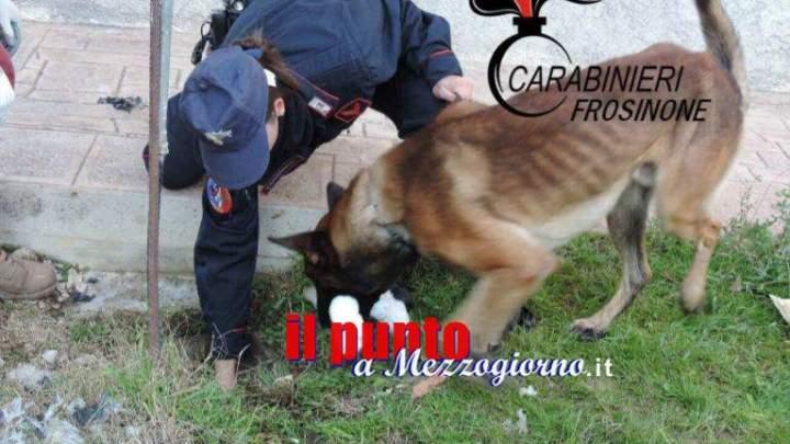 Cane carabiniere dissotterra circa 4 chili di stupefacente, due uomini in manette