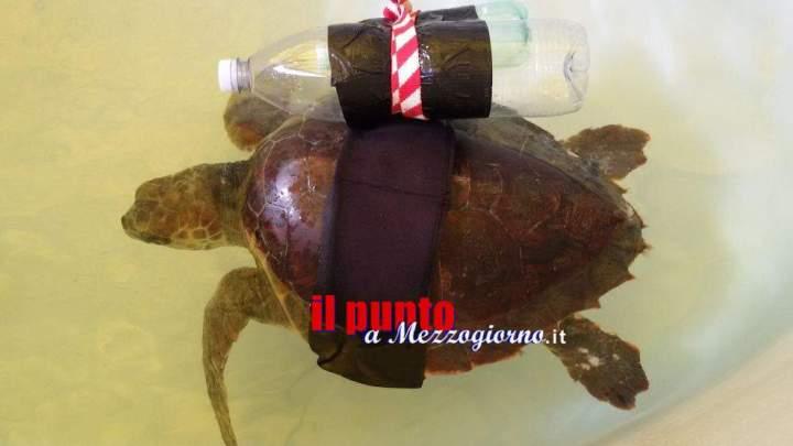 Tartaruga spiaggiata soccorsa e medicata a Zoomarine
