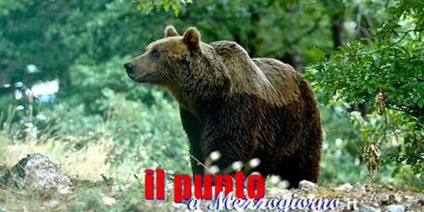 Da Rimini a Civitella Alfedena una mobilitazione in difesa dell'Orso Marsicano