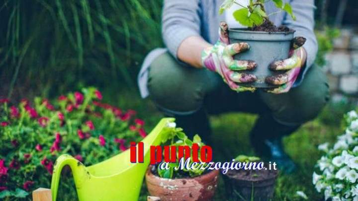 """Legge di bilancio, il """"bonus verde"""" per rinnovare giardini e terrazzi"""