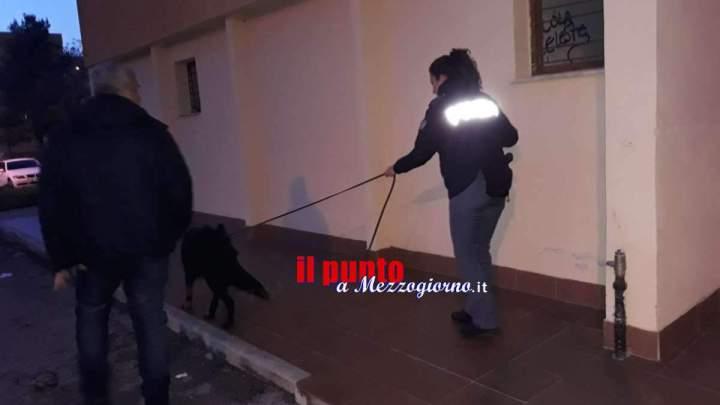 Controlli antidroga a Frosinone, fermati due stranieri: un denunciato e un segnalato