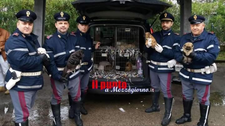 Cuccioli di cane stipati in gabbie, sequestrati sull'A1 a Cassino 59 cani