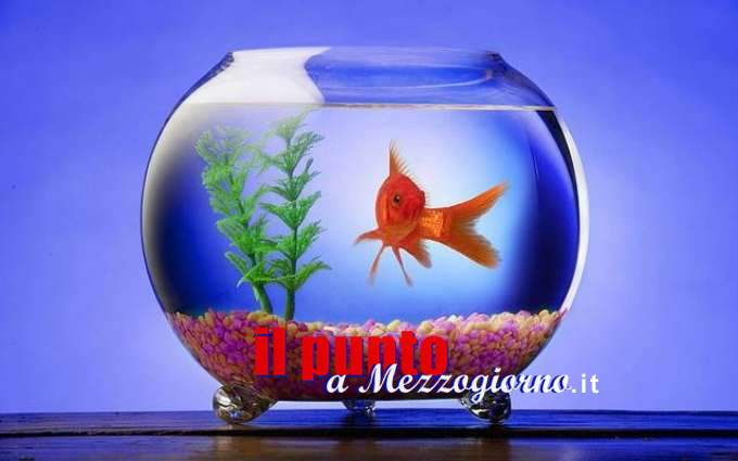 Cresce il fenomeno dell'abbandono dei pesciolini rossi, l'Aidaa lancia l'allarme