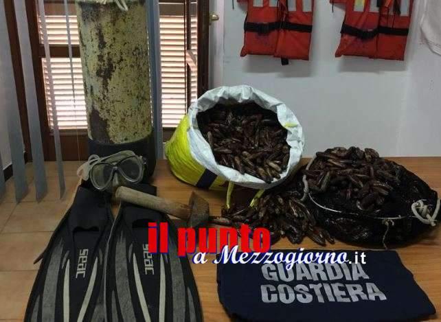 Sequestrati a Scauri 40 kg di datteri di mare, denunciato 50enne