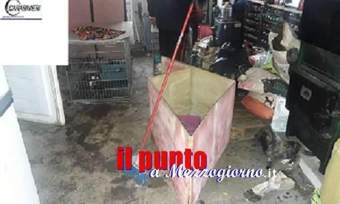 Allevamento di cani abusivo a Ferentino, salvati 35 animali e denunciate 4 persone