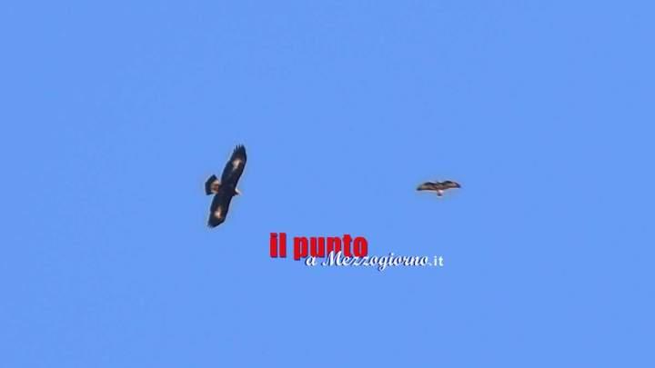 Aquila reale avvistata nel Parco dei Monti Aurunci a Formia,