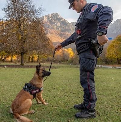 Strage di cani a Settefrati con bocconi avvelenati, rischia anche il cane antiveleno dei Carabinieri Forestali